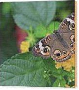 Common Buckeye II Wood Print