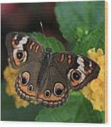 Common Buckeye Wood Print