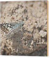 Common Checkered Skipper 8793 3421 Wood Print