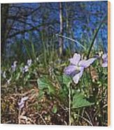 Common Dog-violet Wood Print