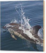 Common Dolphin Delphinus Delphis Wood Print