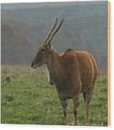 Common Eland Wood Print