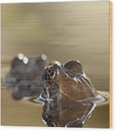 Common Frog (rana Temporaria) In Pond Wood Print