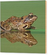 Common Frog Rana Temporaria Wood Print