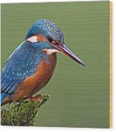 Common Kingfisher Alcedo Atthis Wood Print