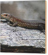 Common Lizard Wood Print