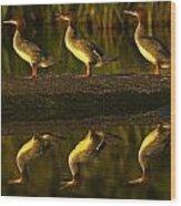 Common Mergansers On Rock Reflecting Wood Print