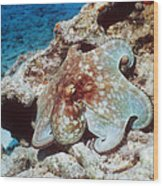 Common Octopus Wood Print