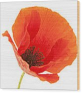 Common Poppy Flower Wood Print