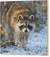 Common Raccoon Wood Print