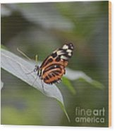 Common Tiger Glassywing Wood Print