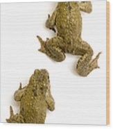 Common Toad Wood Print