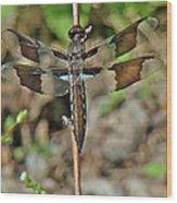 Common Whitetail Dragonfly - Plathemis Lydia - Female Wood Print