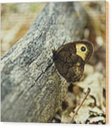 Common Wood-nymph Wood Print