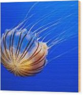 Compass Jellyfish Wood Print