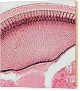 Compound Eye, Honeybee Wood Print