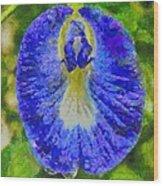 Conch Flower Wood Print