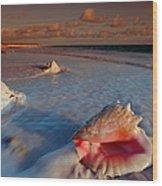 Conch Shell On Beach Wood Print