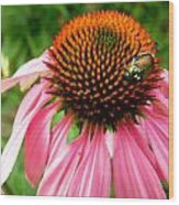Cone Flower And Guest Wood Print