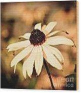 Cone Flower Grunge Wood Print