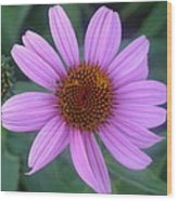 Cone Flower Wood Print by Linda Pope