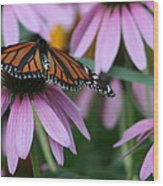 Cone Flowers And Monarch Butterfly Wood Print