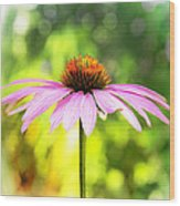 Coneflower Bokeh Wood Print