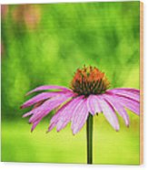 Coneflower In Pink And Green Wood Print
