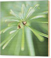 Conifer Leaves Wood Print