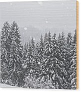Coniferous Forest In Winter, Alps Wood Print by Konrad Wothe