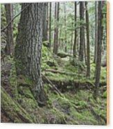 Coniferous Forest, Inside Passage Wood Print