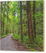 Conkle's Hollow State Park Wood Print
