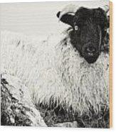 Connemara Sheep Wood Print