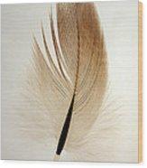Contour Feather Wood Print
