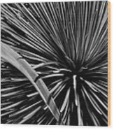 Converging Wood Print