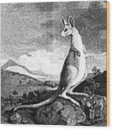 Cook: Kangaroo, 1773 Wood Print