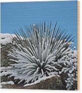 Cool Cacti Wood Print