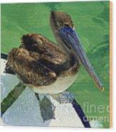Cool Footed Pelican Wood Print
