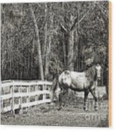 Coosaw - Outside The Fence Black And Wite Wood Print