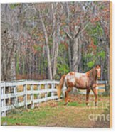 Coosaw - Outside The Fence Wood Print by Scott Hansen