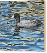 Coot In The Lake Wood Print