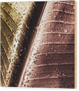 Copper Raindrops Wood Print