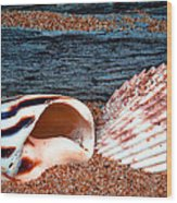 Coquina Shell - 2 Wood Print