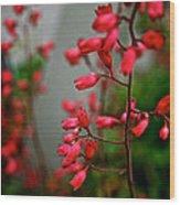Coral Bells Wood Print
