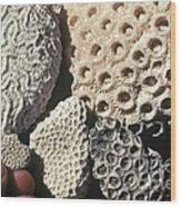 Coral Cobbles On Beach Of Bonaire Wood Print