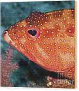 Coral Cod's Head Wood Print by Serena Bowles