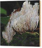 Coral Mushroom 2 Wood Print