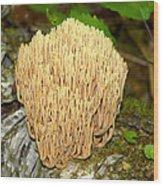 Coral Mushroom Wood Print