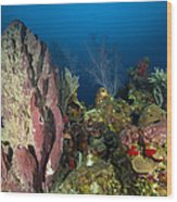 Coral Reef And Sponges, Belize Wood Print