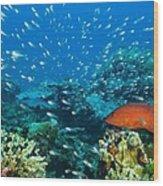 Coral Reef In Thailand Wood Print
